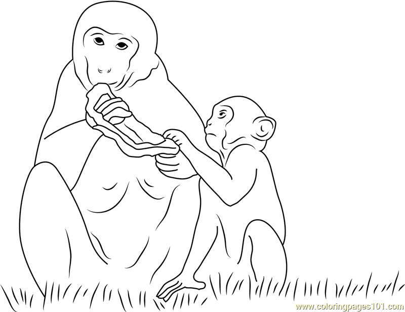 Monkey Eating Bread Coloring Page