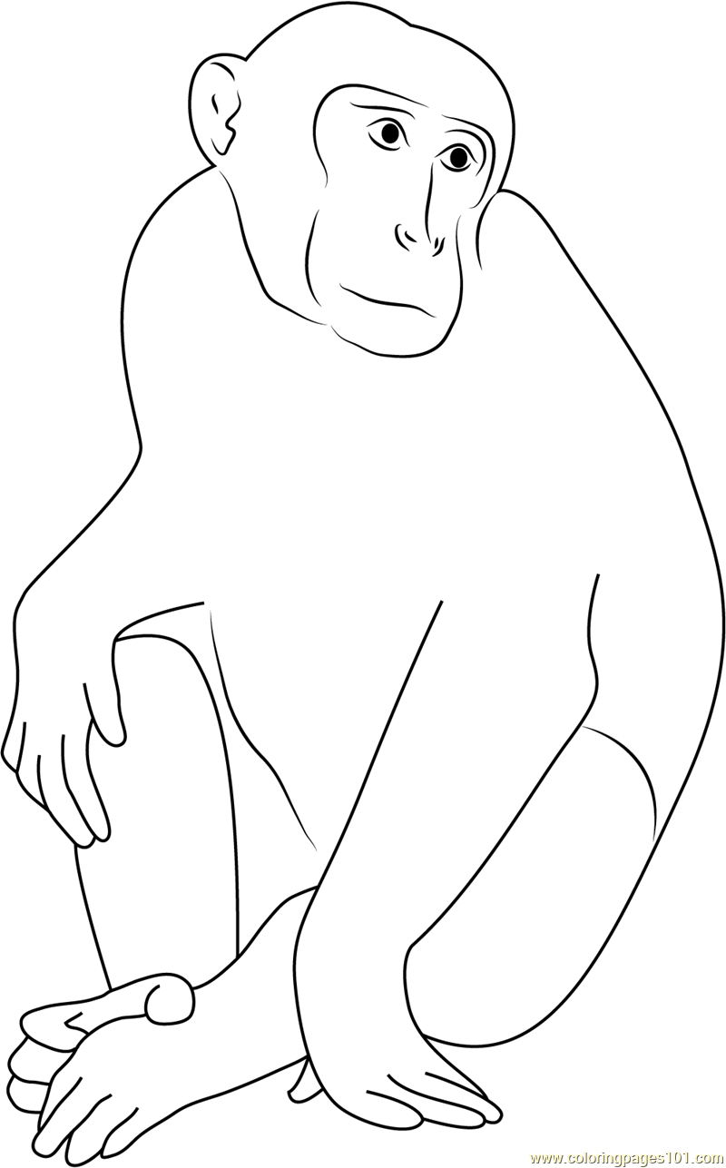 Monkey Portrait Coloring Page For Kids Free Monkey Printable Coloring Pages Online For Kids Coloringpages101 Com Coloring Pages For Kids