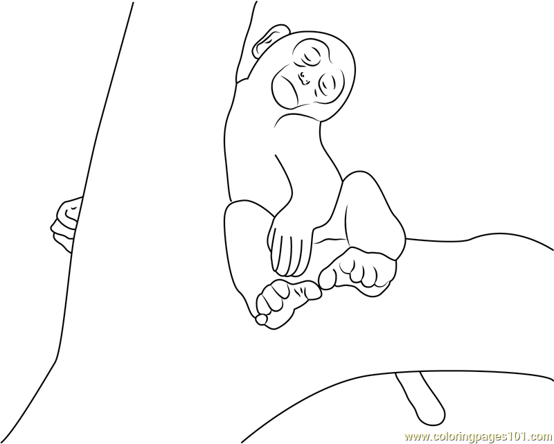 monkey sleeping on tree coloring page