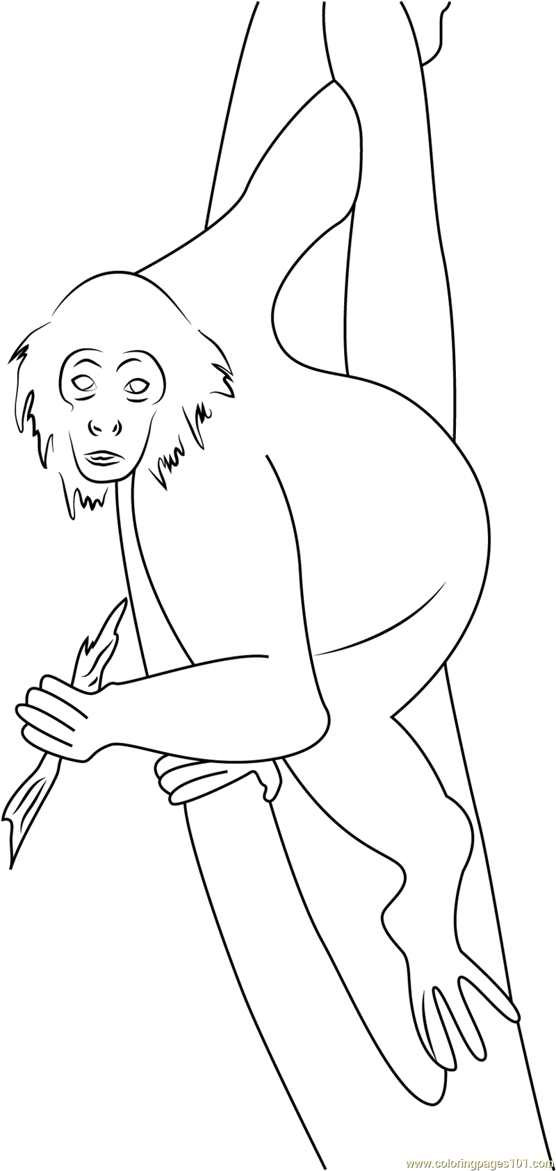 Panama Spider Monkey Costa Rica Coloring Page