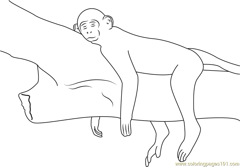 Relaxing Monkey Coloring Page Free Monkey Coloring Pages