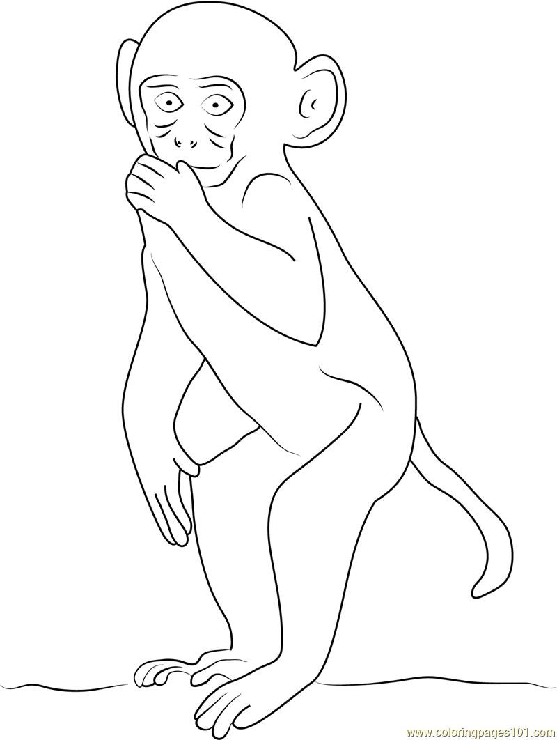 rhesus macaque coloring page free monkey coloring pages