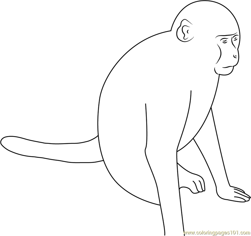 Roadside Monkey Coloring Page