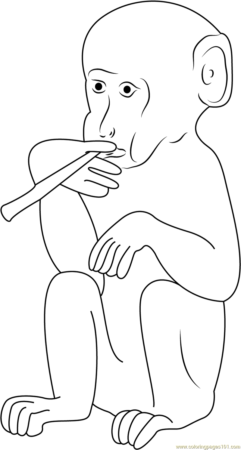 monkey coloring pages printable coloring pages of monkeys