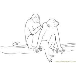 Animal Monkey Indian Free Coloring Page for Kids