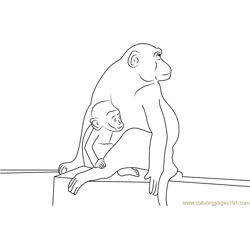 Baby Monkey Matheran India Free Coloring Page for Kids