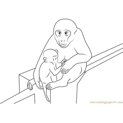 Baby Monkey With Mother Free Coloring Page for Kids