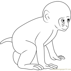 Baby Monkey Free Coloring Page for Kids