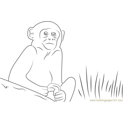 Cute Monkey Free Coloring Page for Kids
