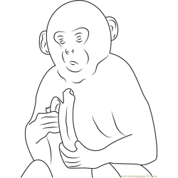 Gray Langur Monkey Free Coloring Page for Kids