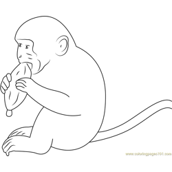 Hungry Monkey Free Coloring Page for Kids