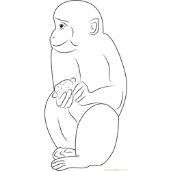 Indian Monkey Free Coloring Page for Kids
