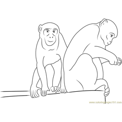 Indian Rhesus Macaque Free Coloring Page for Kids