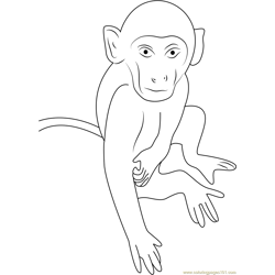 Monkey Close Up Free Coloring Page for Kids