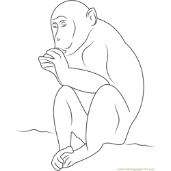 Monkey Don Free Coloring Page for Kids