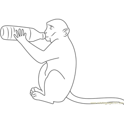 Monkey Drink Milk