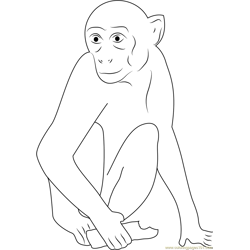 Monkey Having Chocolate Free Coloring Page for Kids