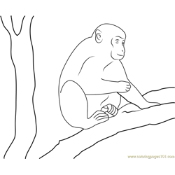 Monkey On Tree Free Coloring Page for Kids