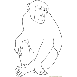 Monkey Portrait Free Coloring Page for Kids