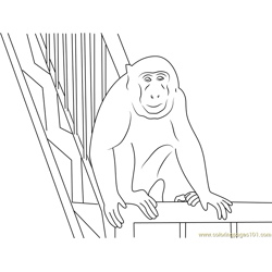 Monkey in Gallery
