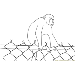 Monkey on Barricade