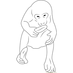 Monkey with Banana Free Coloring Page for Kids
