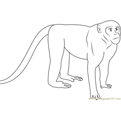 Patas Monkey Up Close Free Coloring Page for Kids