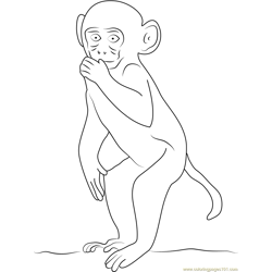Rhesus Macaque Free Coloring Page for Kids