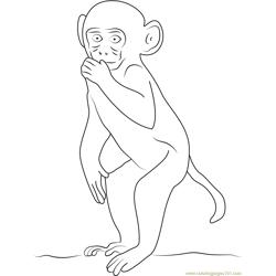 Rhesus Macaque Coloring Page