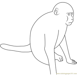 Roadside Monkey Free Coloring Page for Kids