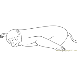 Sleeping Monkey Don Free Coloring Page for Kids