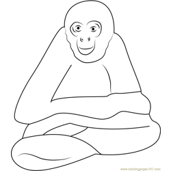 Spider Monkey Free Coloring Page for Kids