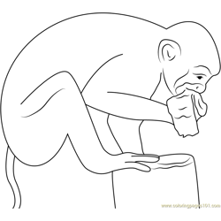 Squirrel Monkey Eating Banana Free Coloring Page for Kids