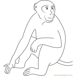 Sundarbans Monkey Free Coloring Page for Kids