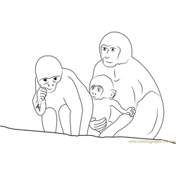 Three Monkeys At Pashu Free Coloring Page for Kids