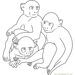 Three Monkeys Free Coloring Page for Kids