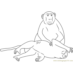 Two Monkey Free Coloring Page for Kids