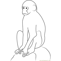 Vervet Monkey Free Coloring Page for Kids