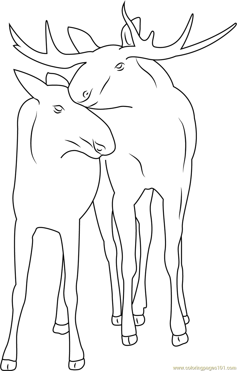 Moose Couple Coloring Page