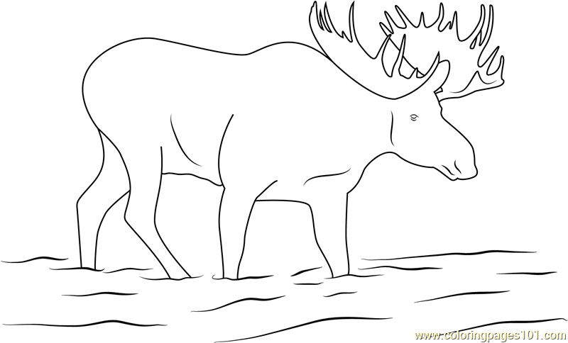 Moose Drink Water Coloring Page