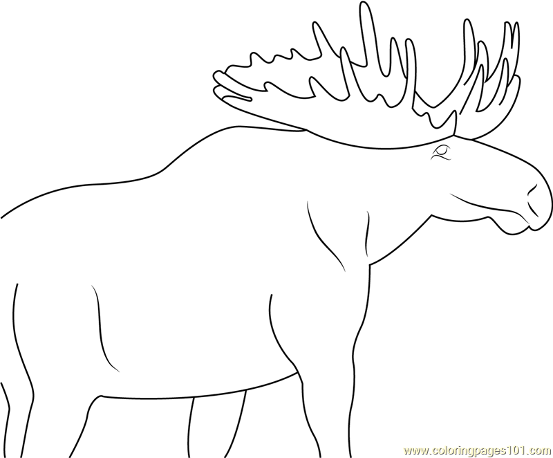 Moose Eating Coloring Page