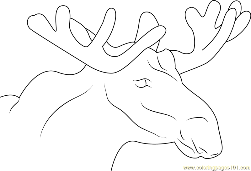 Moose Face Coloring Page