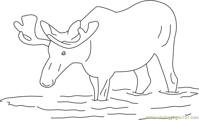 Moose in Water Coloring Page