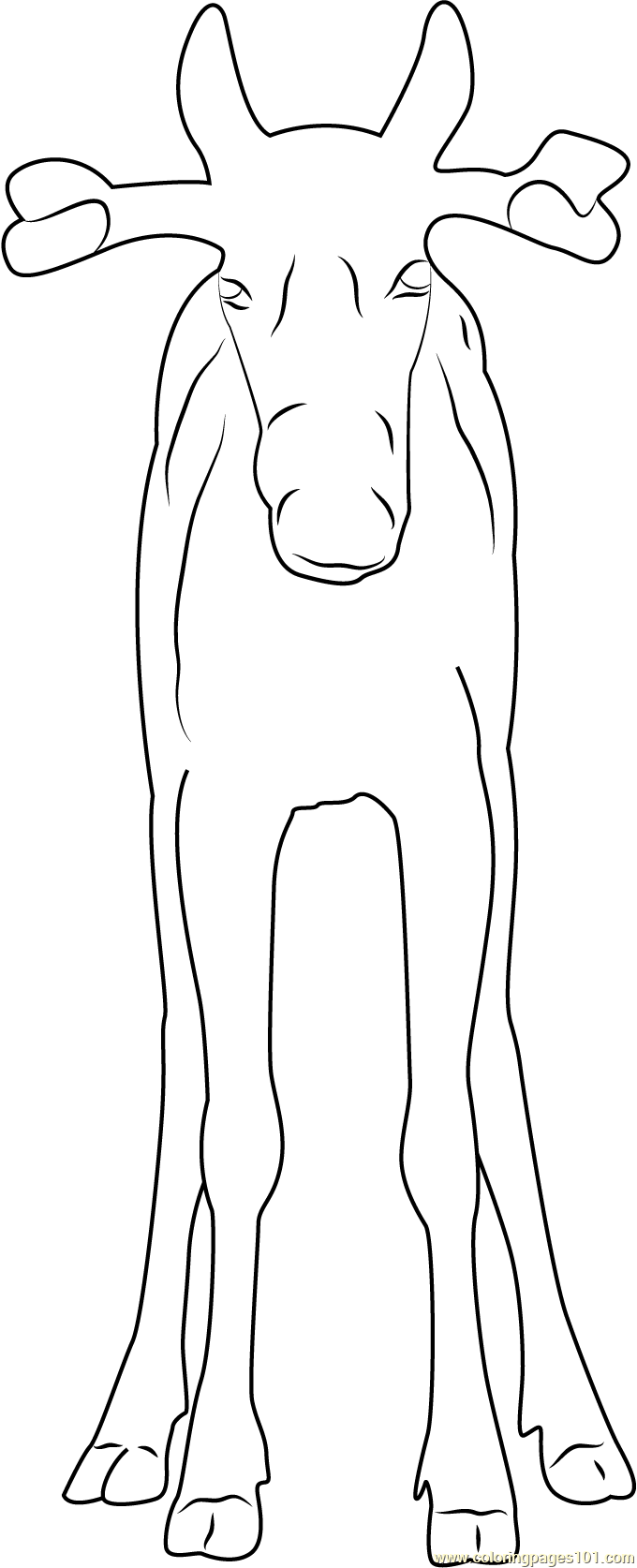 Moose Coloring Page Free Mouse