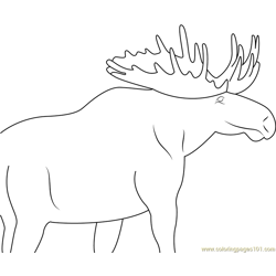 Moose Eating Free Coloring Page for Kids