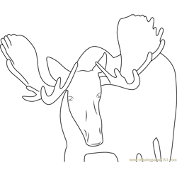 Moose Face Look Free Coloring Page for Kids