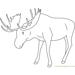 Moose Looking Down Free Coloring Page for Kids