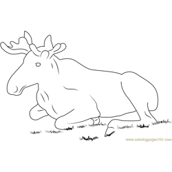 Moose Sitting in Grass Free Coloring Page for Kids