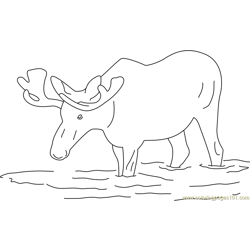 Moose in Water Free Coloring Page for Kids