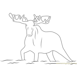 Moose in the River Free Coloring Page for Kids